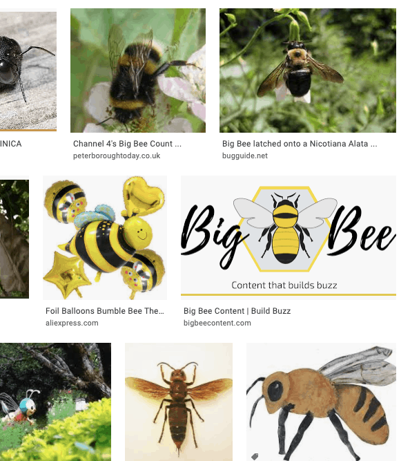 Big Bee Google Images search results page shows Big Bee logo appearing with pictures of big bees